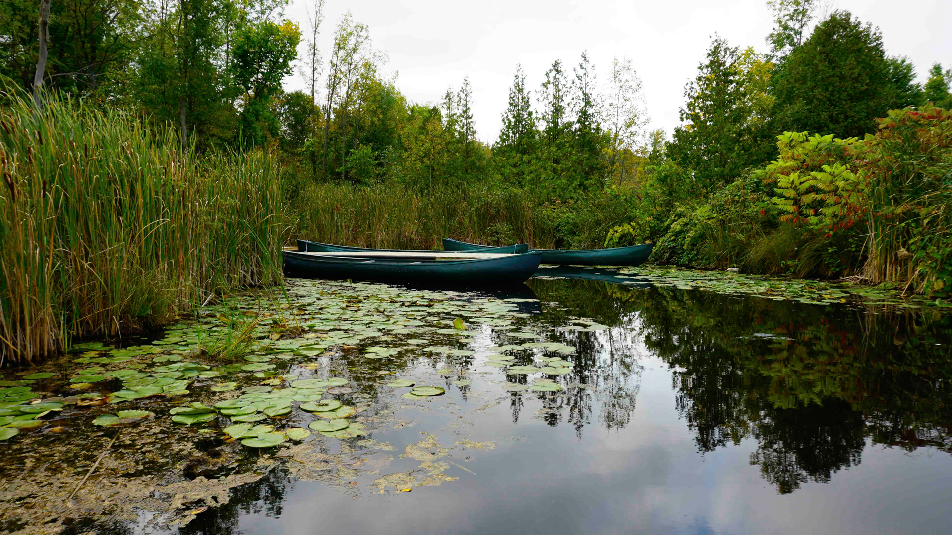 wyeea - Get Ready for National Paddling Week
