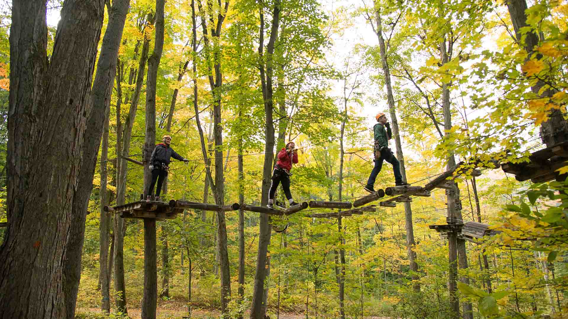 Treetop - Tour These Driving Routes This Fall
