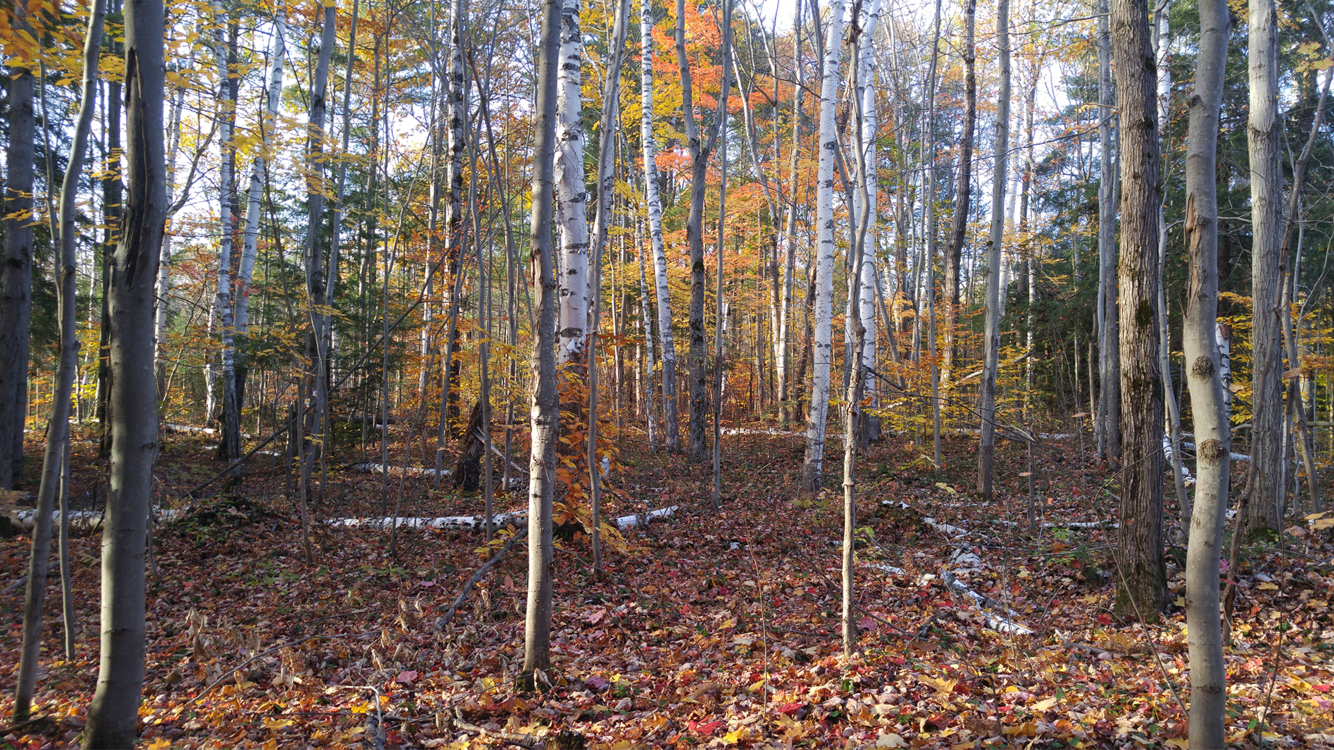 grants woods - Fall Hiking Routes